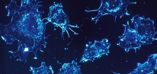 Bacteriorobots vistos por microscopio.