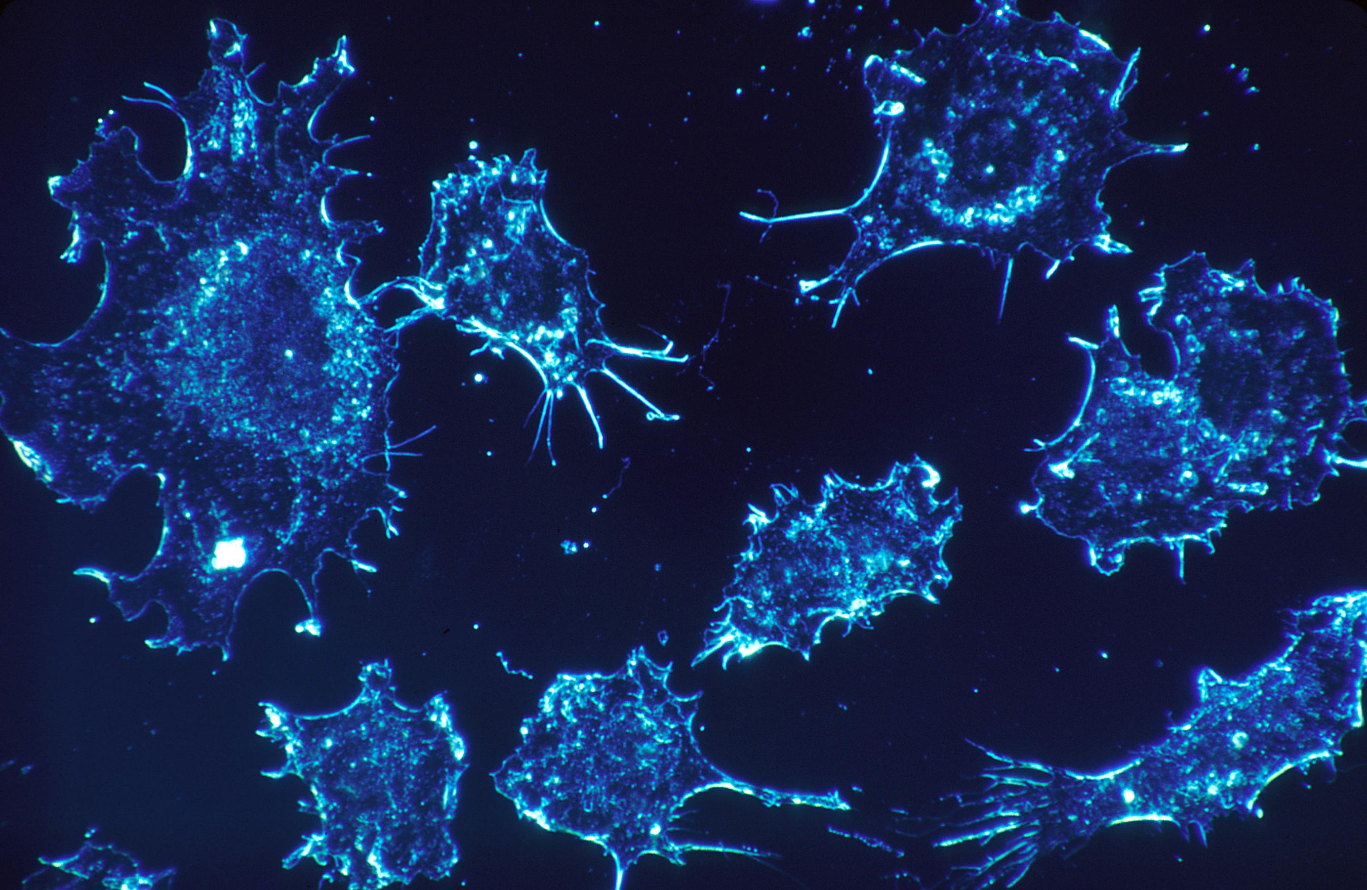células Archives - biologiainteresante.com