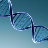 Doble hélice ADN