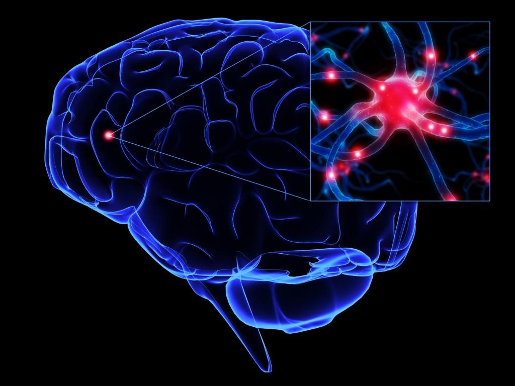 427_cerebro